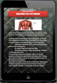 anatomie pectoraux