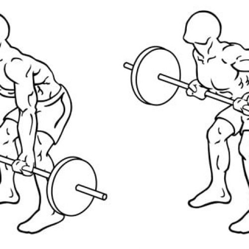 Rowing Barre : Comment réaliser cet exercice pour vous muscler?