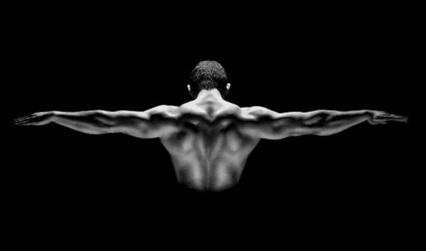 muscle haut du corps