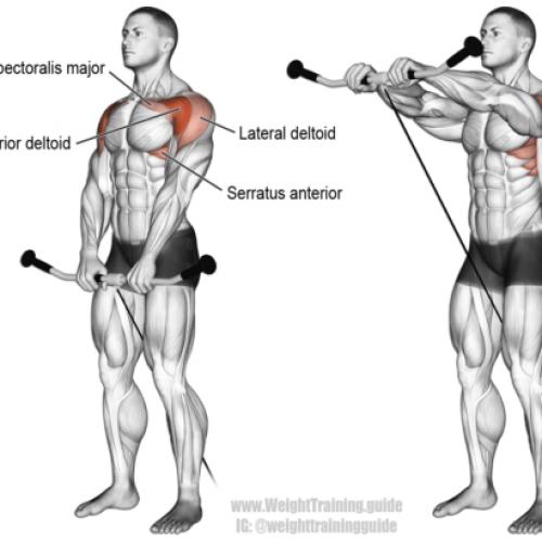Elévations frontales à la corde poulie basse