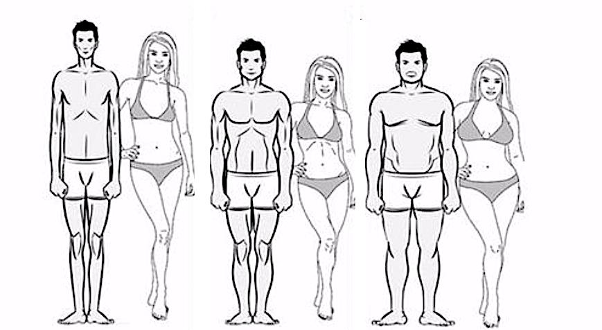 Tout connaître sur les morphotypes en musculation