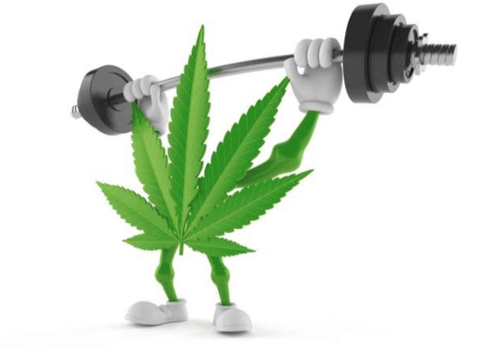 Le cannabis thérapeutique : le remède miracle pour les douleurs de dos ?