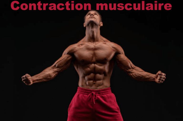 Tout savoir sur les contractions en musculation