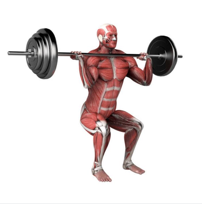 Comment se développent les fibres musculaires en musculation ?